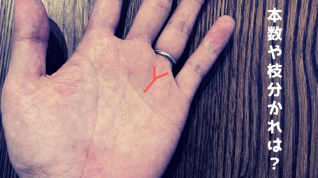 手相 太陽線 2本 長い 複数 スター フィッシュ 意味 Y字赤い文字 白い文字