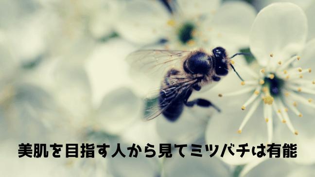 ビーポーレン 効果 副作用 口コミ 美容 市販 ミツバチが花に 白い花がたくさん